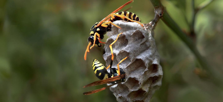 Se débarrasser des cafards et blattes Amnéville