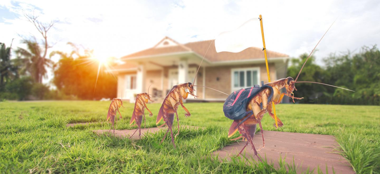 Se débarrasser des cafards et blattes Fontaine